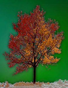 Tree_A_03
