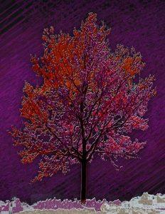 Tree_A_04
