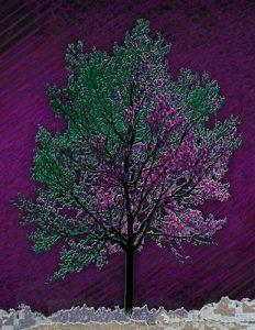 Tree_A_05