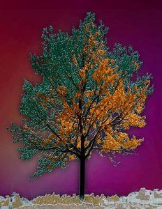 Tree_A_07