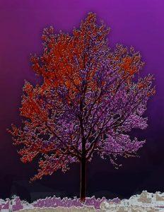 Tree_A_09