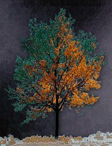Tree_A_10