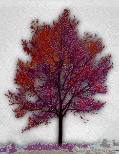 Tree_A_15